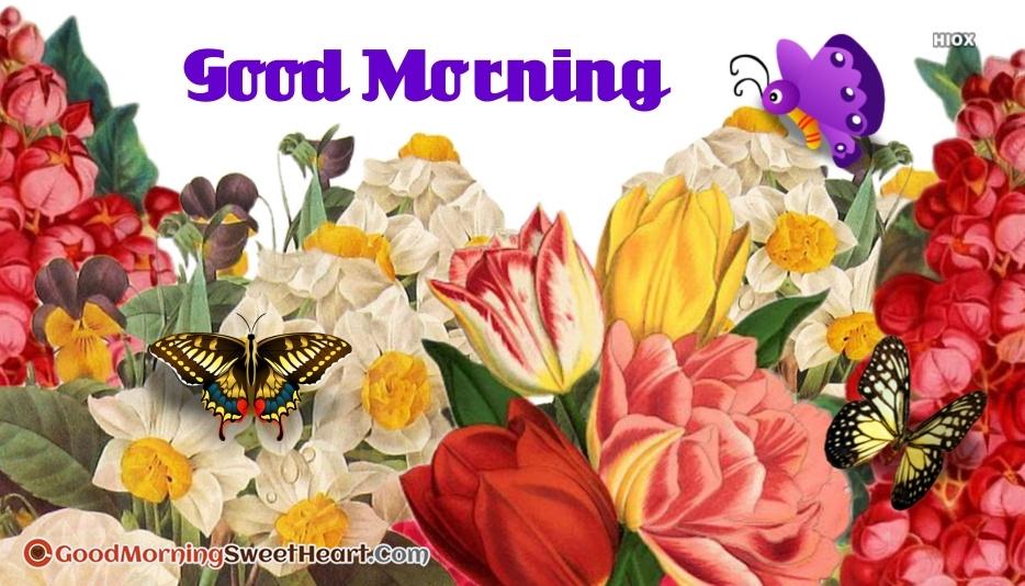 Good Morning Beautiful Photo