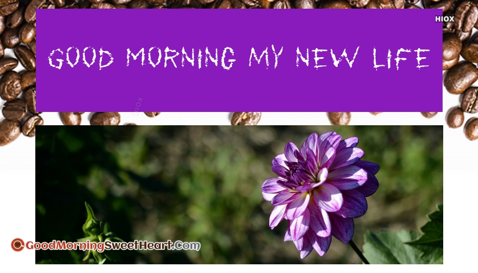 Good Morning My New Life