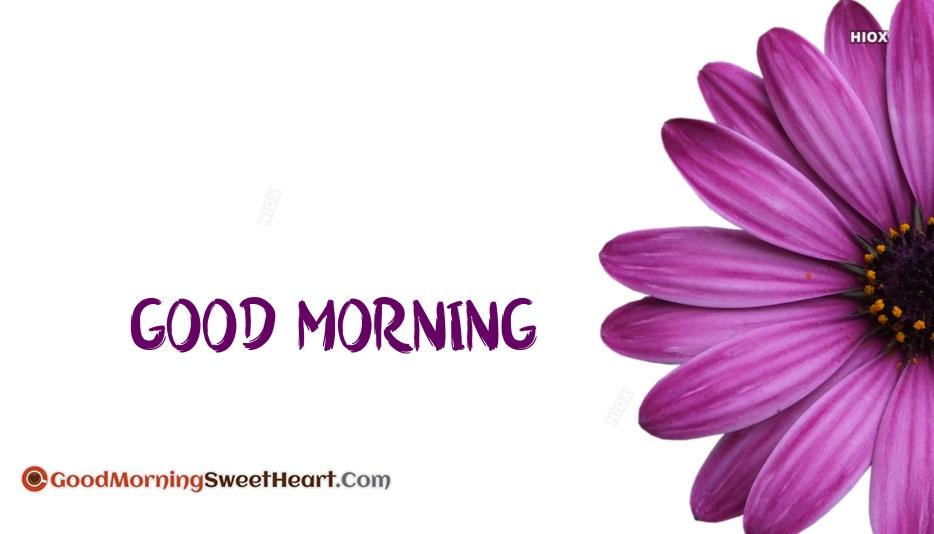 Good Morning PURPLE FLower
