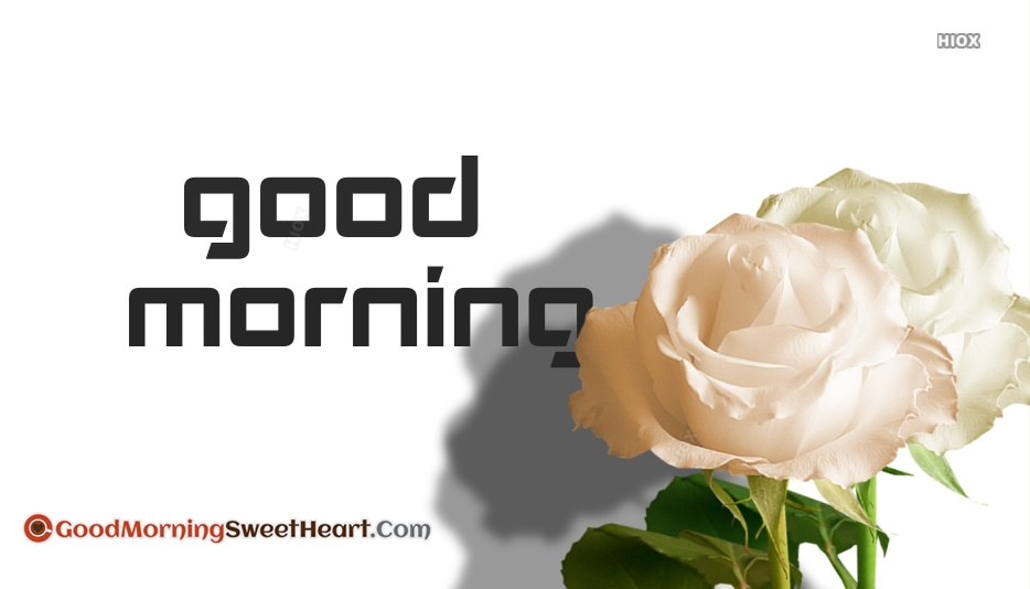 Good Morning Wallpaper With White Rose