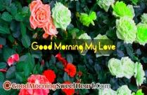 Good Morning My Dear Love